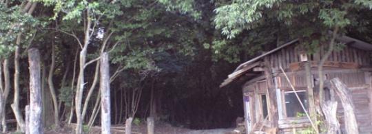 大分に文化カフェ、森林浴と併設?!