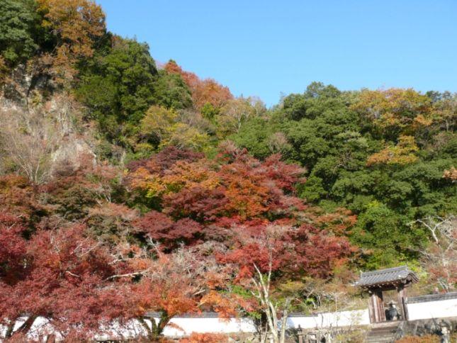 竹田のおたやま公園の紅葉を満喫