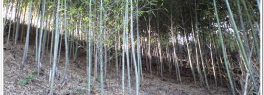 言語習得を自然環境から学ぶ