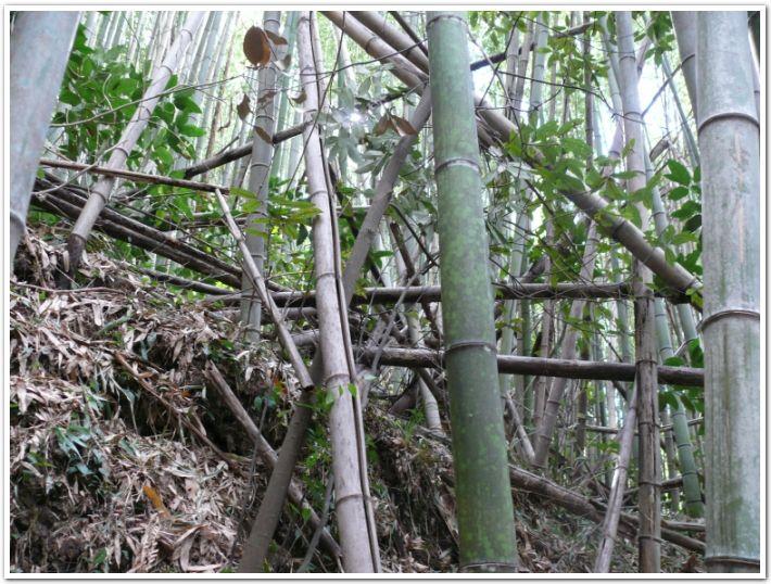 碧い海の会が放置竹林を竹炭にする活動