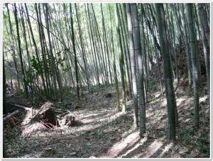 竹林の伐採後
