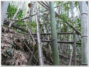 碧い海の会放置竹林処理